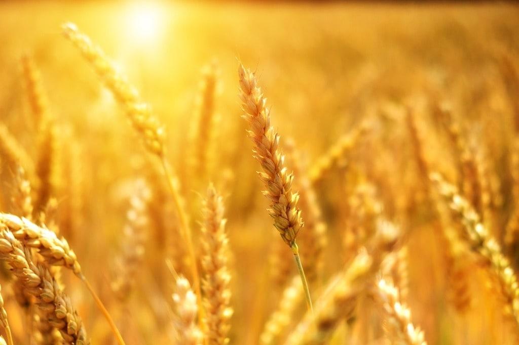 Quelle est la Météo Agricole en Bretagne ?